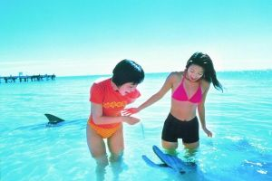 Monkey Mia Dolphins  Shark Bay Air Tour From Perth - Tourism Canberra