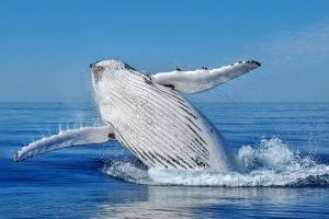 Whale Watching Dunsborough - Tourism Canberra
